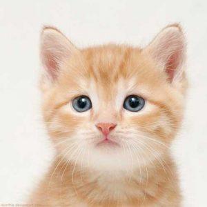 100 Gambar dp bbm kucing lucu dan gemesin 1