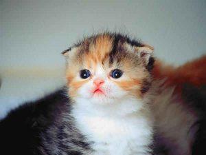 100 Gambar dp bbm kucing lucu dan gemesin 11