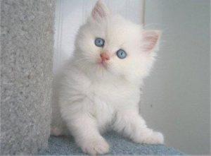 100 Gambar dp bbm kucing lucu dan gemesin 13