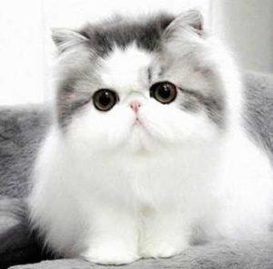 100 Gambar dp bbm kucing lucu dan gemesin 14