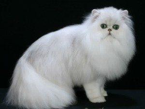100 Gambar dp bbm kucing lucu dan gemesin 15
