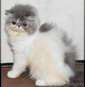 100 Gambar dp bbm kucing lucu dan gemesin 16