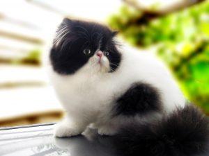 100 Gambar dp bbm kucing lucu dan gemesin 17