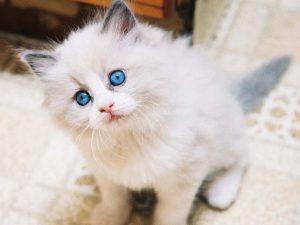 100 Gambar dp bbm kucing lucu dan gemesin 18