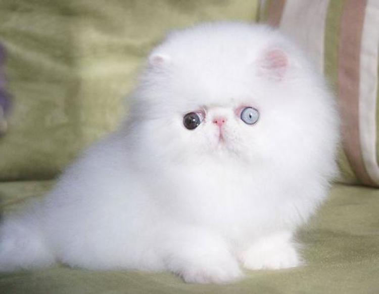 50 Gambar DP BBM Kucing Lucu, Imut & Gemesin
