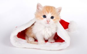 100 Gambar dp bbm kucing lucu dan gemesin 2