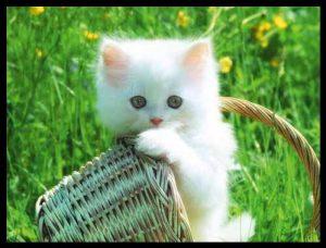 100 Gambar dp bbm kucing lucu dan gemesin 20