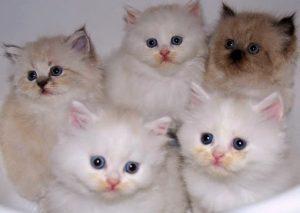 100 Gambar dp bbm kucing lucu dan gemesin 21