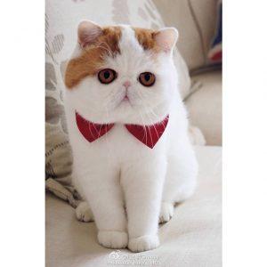 100 Gambar dp bbm kucing lucu dan gemesin 23