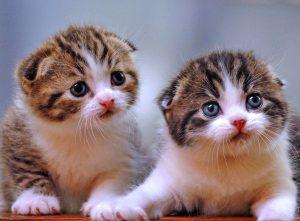 100 Gambar dp bbm kucing lucu dan gemesin 24