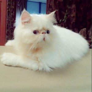 100 Gambar dp bbm kucing lucu dan gemesin 25