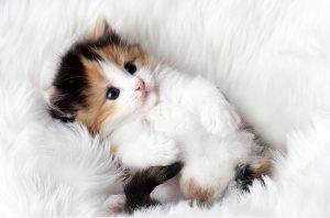 100 Gambar dp bbm kucing lucu dan gemesin 27