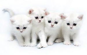 100 Gambar dp bbm kucing lucu dan gemesin 28