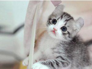 100 Gambar dp bbm kucing lucu dan gemesin 29