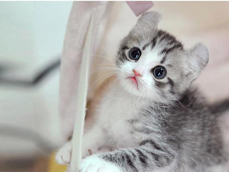 50 Gambar DP BBM Kucing Lucu, Imut & Gemesin | Berbagai Gadget