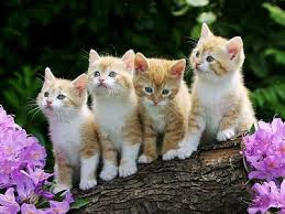 100 Gambar dp bbm kucing lucu dan gemesin 3