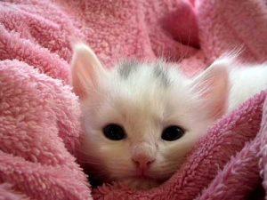 100 Gambar dp bbm kucing lucu dan gemesin 30