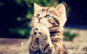100 Gambar dp bbm kucing lucu dan gemesin