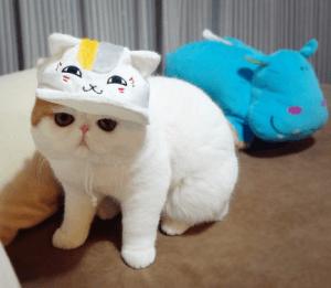 100 Gambar dp bbm kucing lucu dan gemesin 32