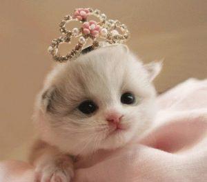 100 Gambar dp bbm kucing lucu dan gemesin 33