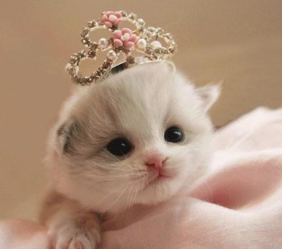 Gambar Foto Kucing Lucu