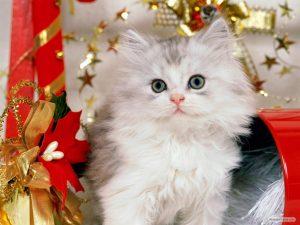 100 Gambar dp bbm kucing lucu dan gemesin 34