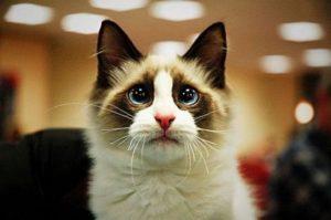 100 Gambar dp bbm kucing lucu dan gemesin 35