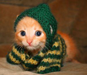 100 Gambar dp bbm kucing lucu dan gemesin 36