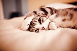 100 Gambar dp bbm kucing lucu dan gemesin 38