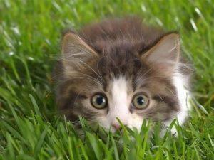 100 Gambar dp bbm kucing lucu dan gemesin 39