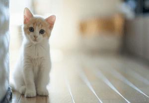 100 Gambar dp bbm kucing lucu dan gemesin 40