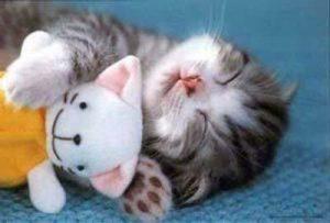 100 Gambar dp bbm kucing lucu dan gemesin 5