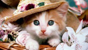 100 Gambar dp bbm kucing lucu dan gemesin 6