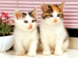 100 Gambar dp bbm kucing lucu dan gemesin 7