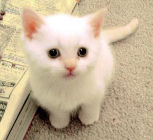 100 Gambar dp bbm kucing lucu dan gemesin 8