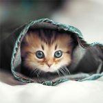 100 Gambar DP BBM Kucing Lucu, Imut & Gemesin